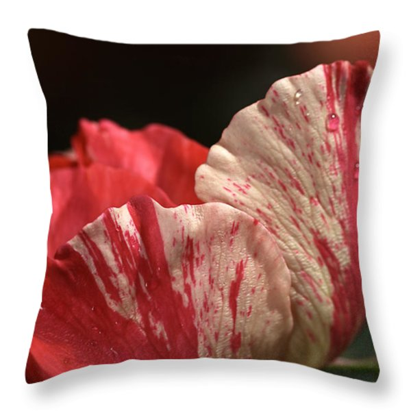 Two Toned Rose Throw Pillow by Joy Watson
