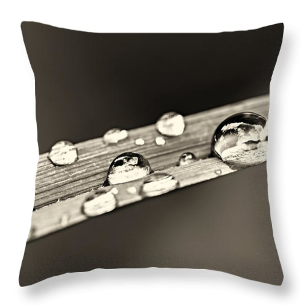 Water drops on grass blade Throw Pillow by Elena Elisseeva