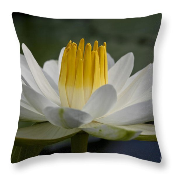 Water Lily Throw Pillow by Heiko Koehrer-Wagner