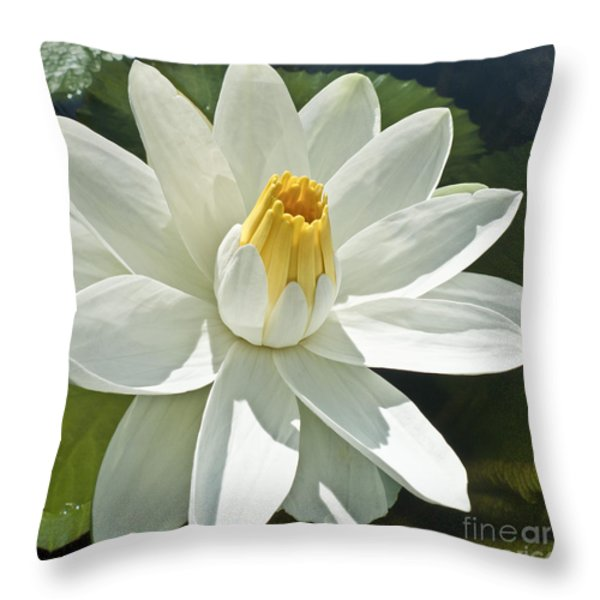 White Water Lily - Nymphaea Throw Pillow by Heiko Koehrer-Wagner