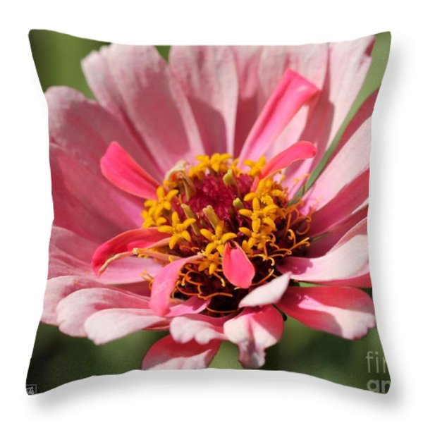 Zinnia from the Whirlygig Mix Throw Pillow by J McCombie