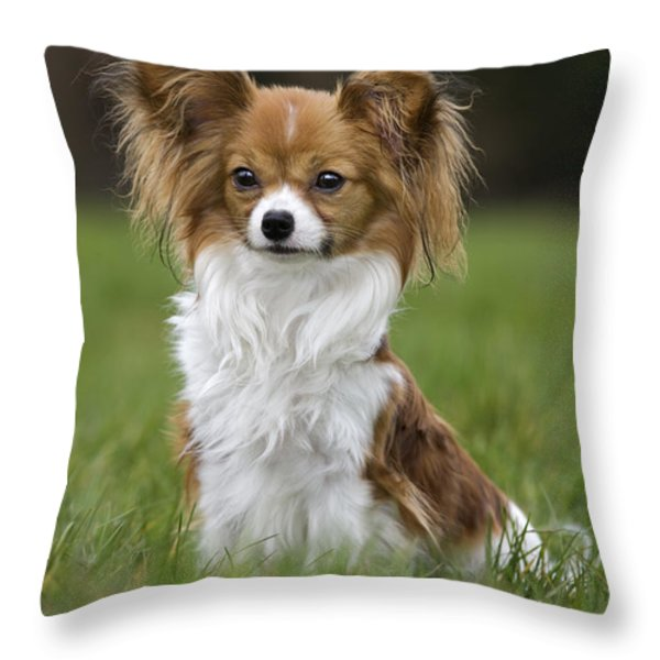 110506p146 Throw Pillow by Arterra Picture Library