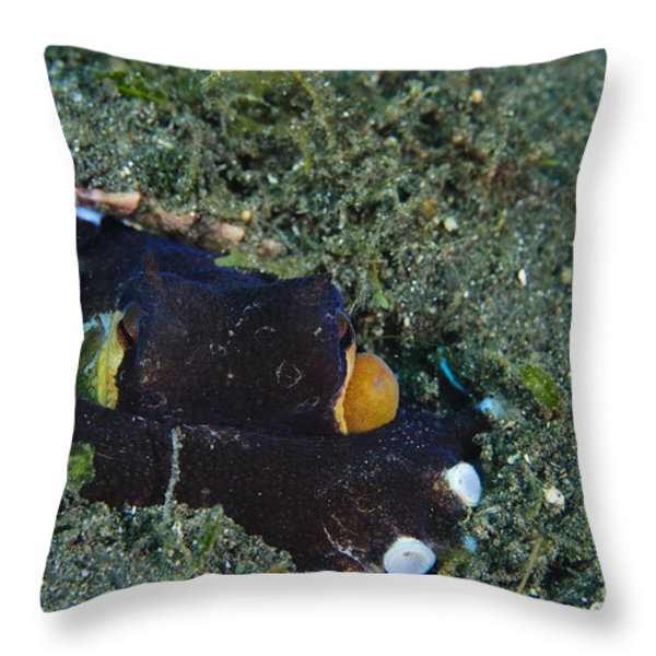 A Coconut Octopus, Lembeh Strait Throw Pillow by Steve Jones