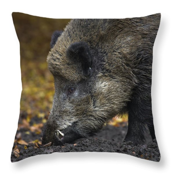 121213p269 Throw Pillow by Arterra Picture Library