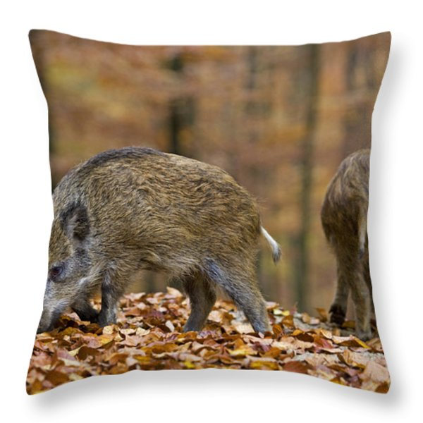 121213p274 Throw Pillow by Arterra Picture Library