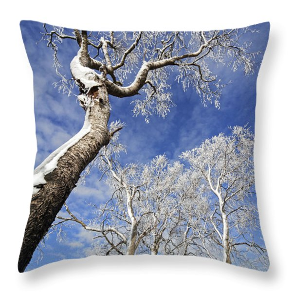 130201p343 Throw Pillow by Arterra Picture Library