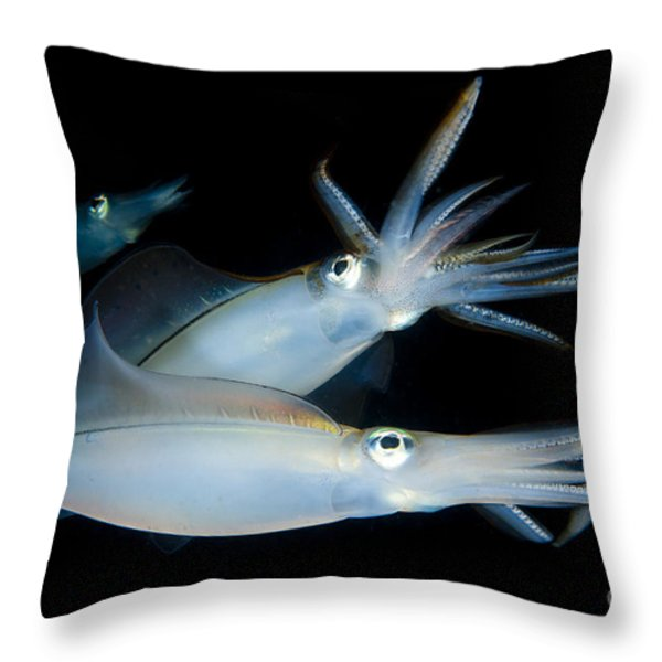 Bigfin Reef Squid Tending Eggs Throw Pillow by Steve Jones