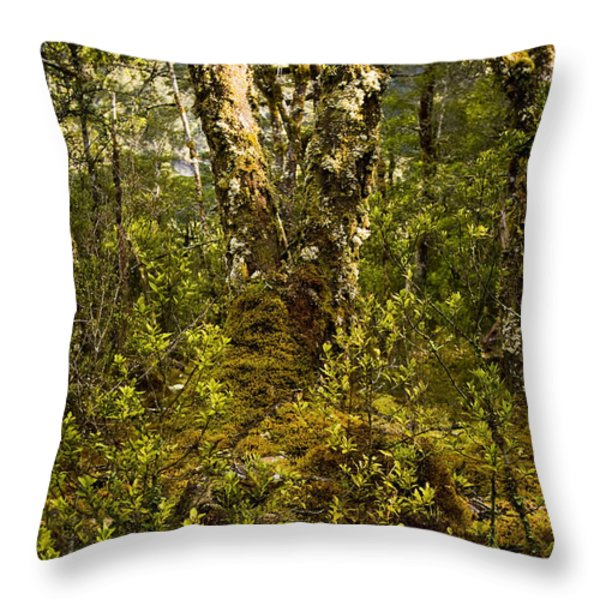 Ancient Woods Throw Pillow by Tim Hester