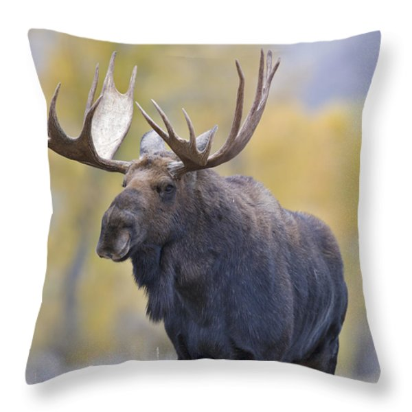 Autumn Bull Moose III Throw Pillow by Gary Langley