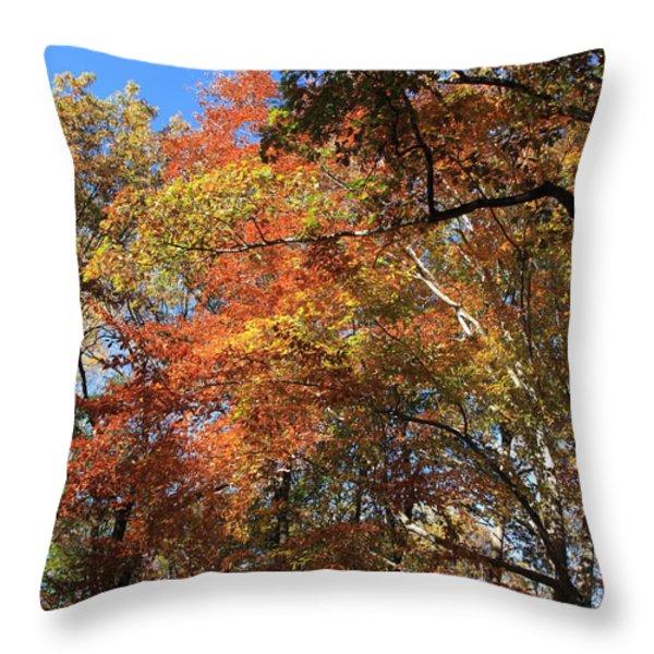 Autumn Trees Throw Pillow by Frank Romeo