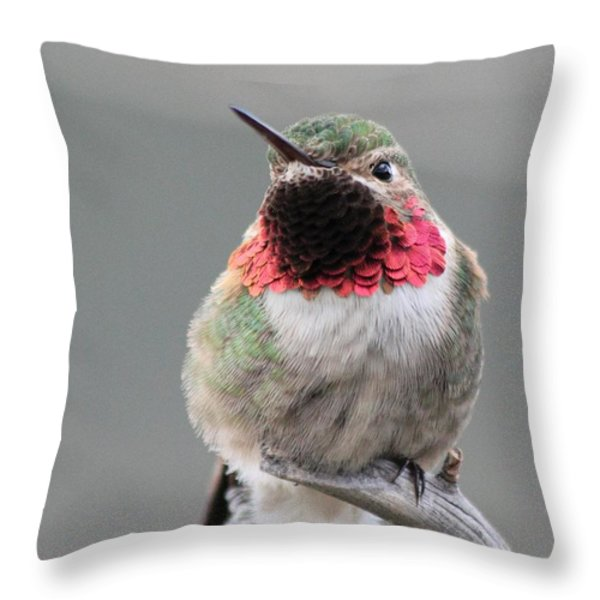 Broad-tailed Hummingbird Throw Pillow by Shane Bechler