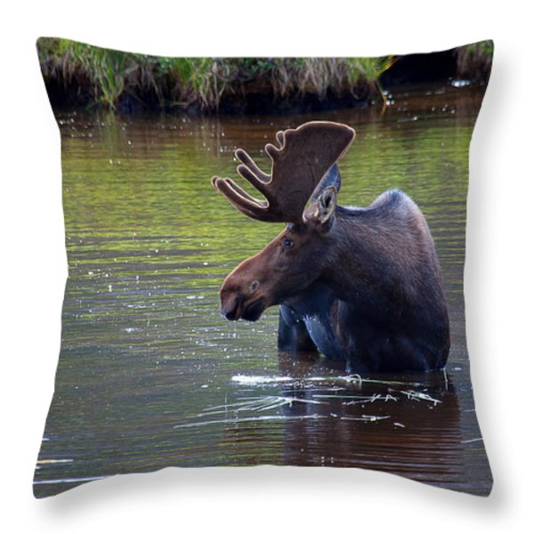 Cooling Off Throw Pillow by Jim Garrison