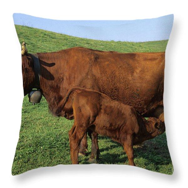 Cows salers Throw Pillow by BERNARD JAUBERT