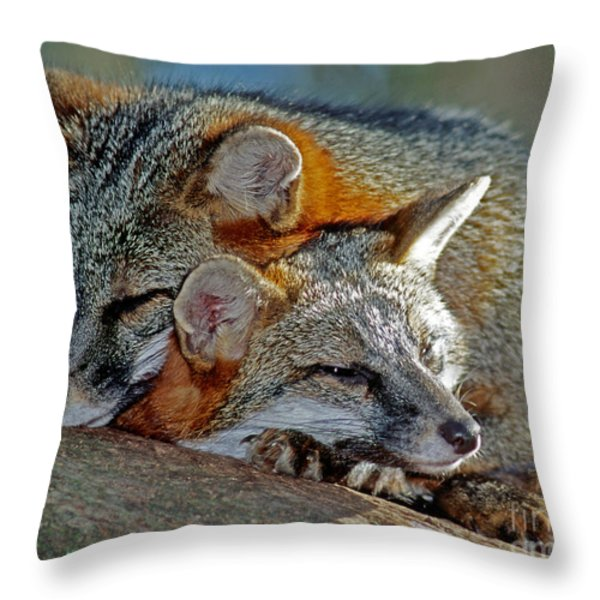 Grey Foxes Throw Pillow by Millard H. Sharp