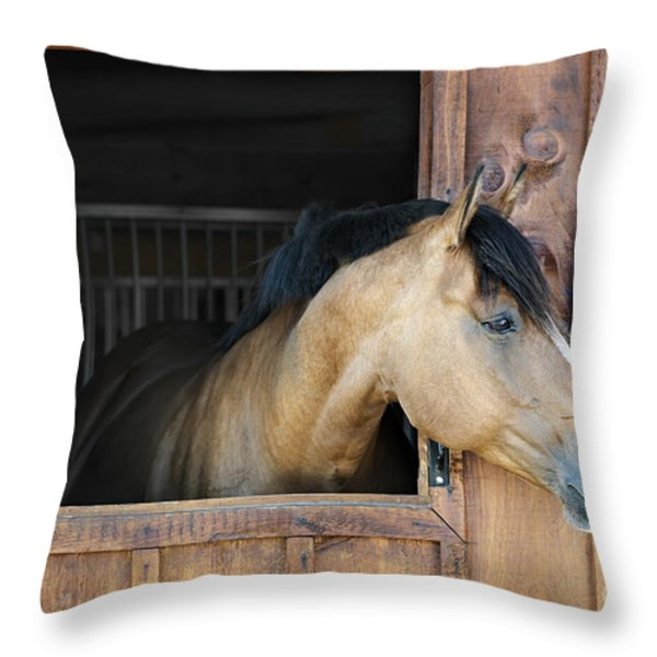 Horse In Stable Throw Pillow by Elena Elisseeva