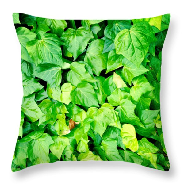 Ivy Throw Pillow by Les Cunliffe