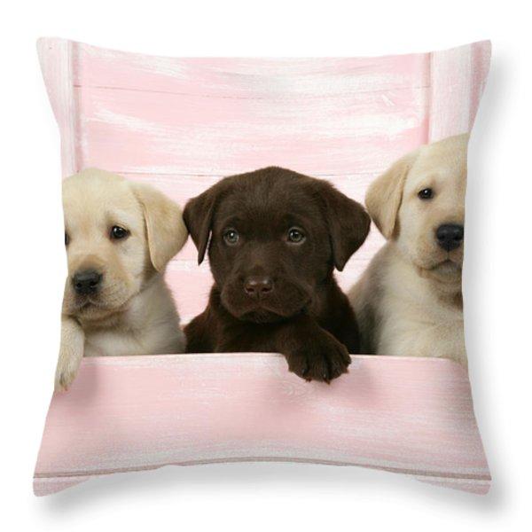 Labrador Retriever Puppies Throw Pillow by John Daniels