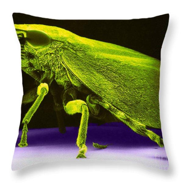 Leafhopper, Sem Throw Pillow by David M. Phillips