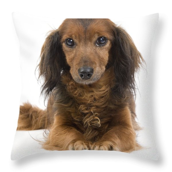 Long-haired Dachshund Throw Pillow by Jean-Michel Labat