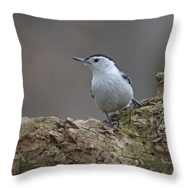 Nuthatch Throw Pillow by Jim Nelson