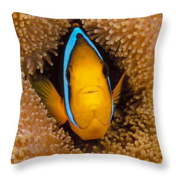Orange Fin Anemonefish Throw Pillow by Dave Fleetham