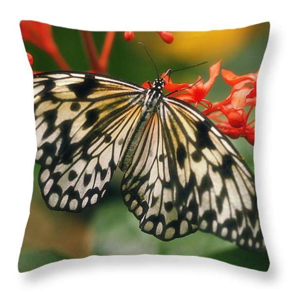 Paper Kite Butterfly Throw Pillow by Cindi Ressler