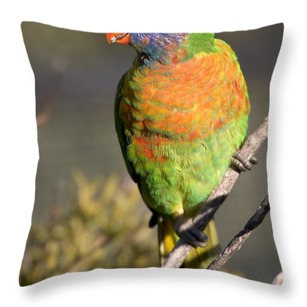 Rainbow Lorikeet Throw Pillow by Steven Ralser