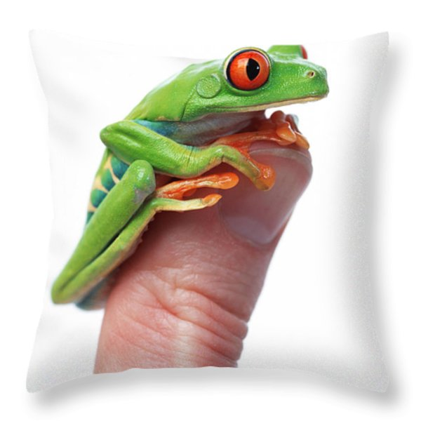 Red-eyed Tree Frog Agalychnis Callidryas Throw Pillow by Corey Hochachka