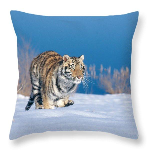 Siberian Tiger Throw Pillow by Alan Carey