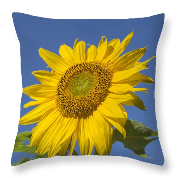 Sunny Day Throw Pillow by Alana Ranney