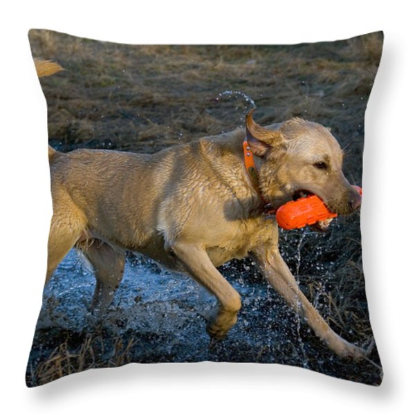 Yellow Labrador Throw Pillow by Linda Freshwaters Arndt