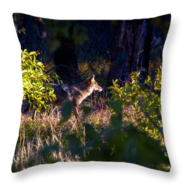 2013 Oct Coyote on the Move Throw Pillow by Rick Grisolano Photography LLC