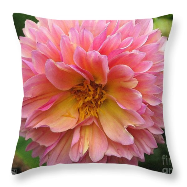 Dahlia From The Showpiece Mix Throw Pillow by J McCombie