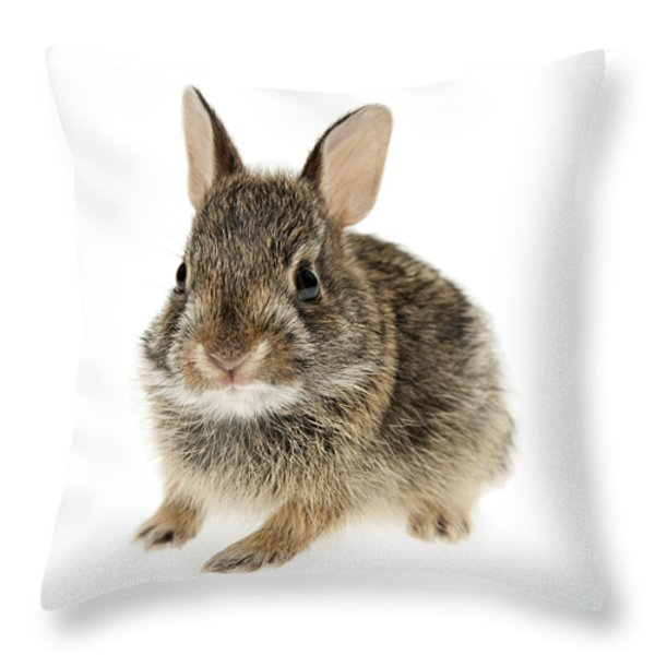 Baby cottontail bunny rabbit Throw Pillow by Elena Elisseeva