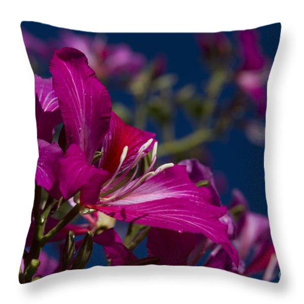 Bauhinia Purpurea - Hawaiian Orchid Tree Throw Pillow by Sharon Mau