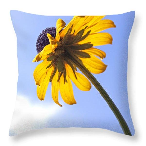 Black-eyed Susan Throw Pillow by Tony Cordoza