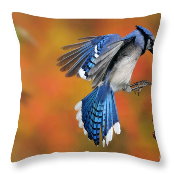 Blue Jay Throw Pillow by Scott Linstead