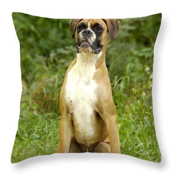 Boxer Dog Throw Pillow by Jean-Michel Labat