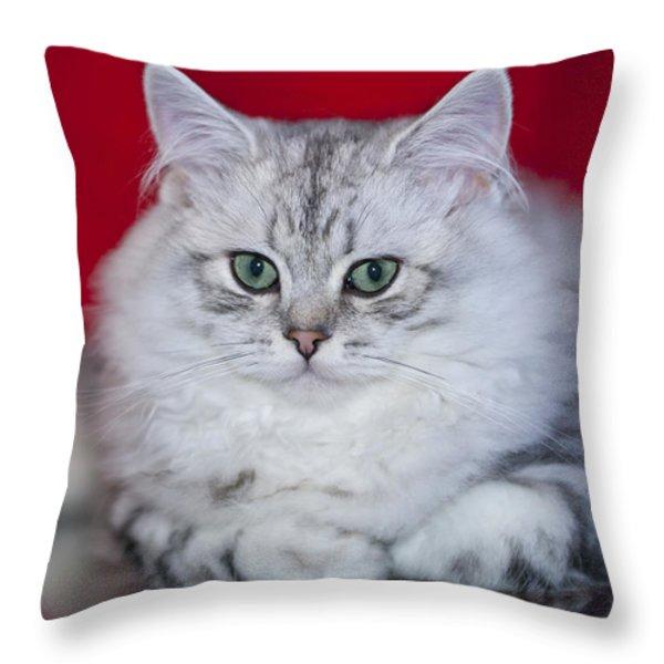 British Longhair Kitten Throw Pillow by Melanie Viola