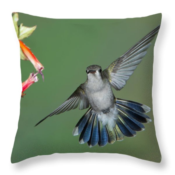 Broad-billed Hummingbird Throw Pillow by Anthony Mercieca
