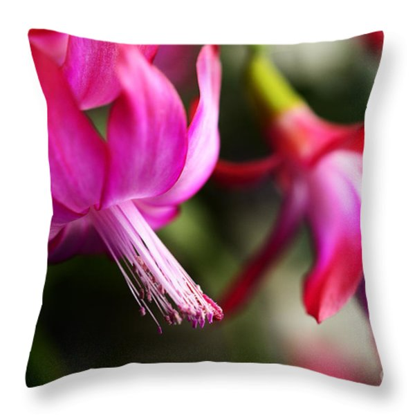 Christmas Cactus In Bloom Throw Pillow by Thomas R Fletcher