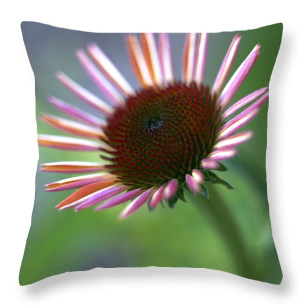 Coneflower Throw Pillow by Tony Cordoza