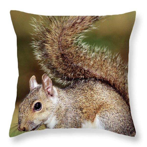 Eastern Gray Squirrel Throw Pillow by Millard H. Sharp