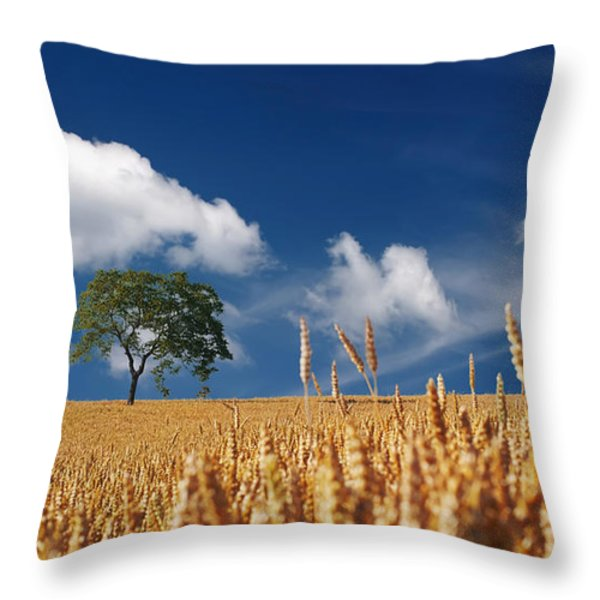 Fields of Grain Throw Pillow by Mountain Dreams