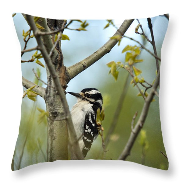 Hairy Woodpecker Throw Pillow by Linda Freshwaters Arndt