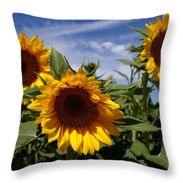 3 Sunflowers Throw Pillow by Kerri Mortenson