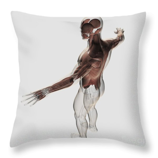 Anatomy Of Male Muscles In Upper Body Throw Pillow by Stocktrek Images