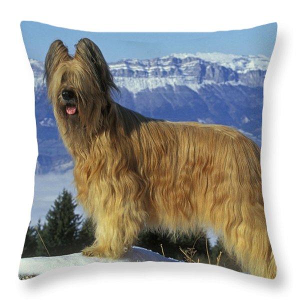 Briard Dog Throw Pillow by Jean-Michel Labat