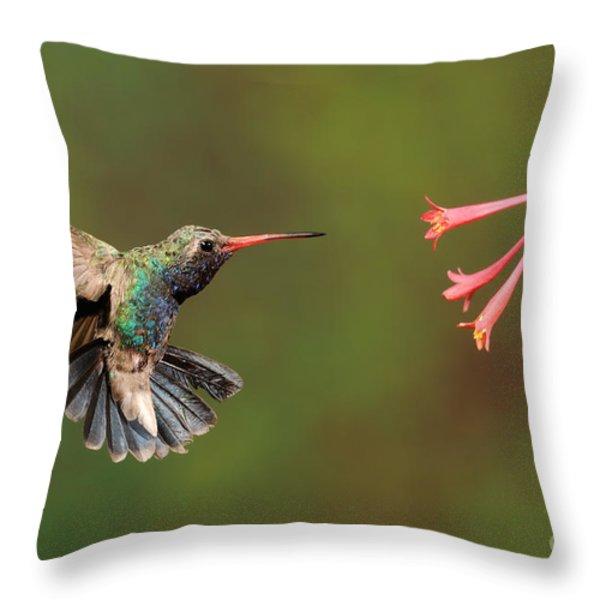 Broad Billed Hummingbird Throw Pillow by Scott Linstead