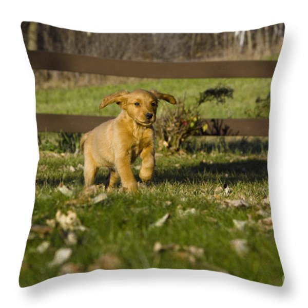 Golden Retriever Pup Throw Pillow by Linda Freshwaters Arndt